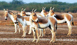 Bhuj – Mandvi – Mata No Madh - Narayan Sarovar- Koteshwar- White Desert